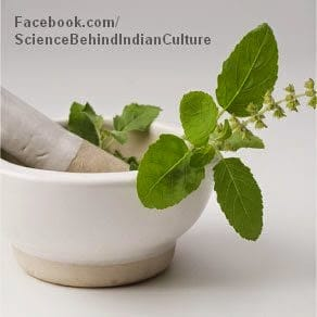 Tulsi Leaves Representational Picture | Science Behind Indian Culture